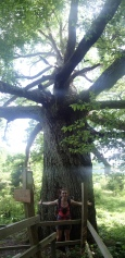 Biggest tree in the southern section of the AT, 18 ft in diameter!